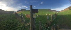 Fridaythorpe New Year's Eve walk, 2018 (D  a  v  e) Tags: footpath bridleway panoramic panorama clouds trees sky newyear'seve 2018 december unitedkingdom england woldsway fingerpost barbedwire gate field sheep plantation fence dryvalley wolds yorkshire fridaythorpe huggate horsedale holmdale