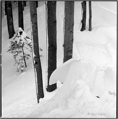 Durch den Wald_Hasselblad (ksadjina) Tags: 10min 6x6 adoxaph09 austria carlzeisssonnar150mmf14 hasselblad500cm kodak400tmax nikonsupercoolscan9000ed nockstein salzburg silverfast analog blackwhite film scan winter
