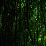 Plantentuin Meise - 20190103 - Floridylle d'hiver thumbnail