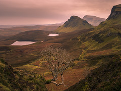 The Tree of Quiraing (stefanblombergphotography.com) Tags: clouds goldenhour hill hillside isleofskye landscape light mountain nature outdoor peaceful rock scottland serene silence sky softlight stefanblombergphotography tranquil tree wwwstefanblombergphotographycom