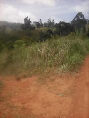 terre sèche (semowilson) Tags: terre rouge seche afrique africa nature biologie biology ecologie ecology champ village environnement