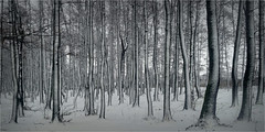 Winter picture (lucjanglo) Tags: tychy poland europe nature park silesian