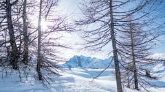 Simplonpass_26. Januar 2018-5 (silvio.burgener) Tags: simplonpass simplon switzerland adler schweiz swiss svizzera suisse hospiz sempione steinadler