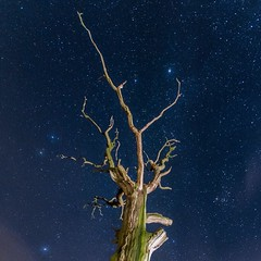 Beauty is the experience that gives us a sense of joy and a sense of peace simultaneously~!! ✨ #sunday #weekend #night #sky #stars #sky #light #deadtree #nikon #d7100 #lens100_200mm #f3_5 #photography #outdoor #explore #quote #likes #love (Gillaniez) Tags: sunday weekend night sky stars light deadtree nikon d7100 lens100200mm f35 photography outdoor explore quote likes love