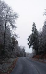 Burdened Way (oldoinyo) Tags: trees ice glazing freezingrain icestorm northcarolina
