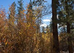 Water, Water, Everywhere? (San Bernardino Nat'l Forest) Tags: woodlandtrail naturetrail bigbear hikingtrail willow