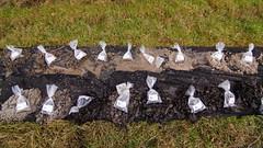 Jordprøver fra 80 meter (Steenjep) Tags: herning jylland jutland danmark denmark vand vandboring water waterdrilling drilling drill earth samples jord jordprøver ahøjfeldt