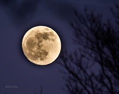 Preview of the Super Blood Wolf Full Moon . . . (Dr. Farnsworth) Tags: full moon eclipse lunar super blood wolf trees shadow fernridge mi michigan winter january2019