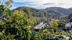 OURTHE (Sonja Ooms) Tags: belgie belgique belgium comblainaupont foret green nature ourthe river rivier riviere water bos forest