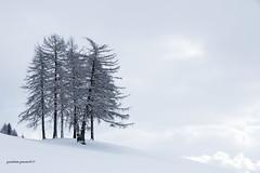 tree (Gina.Di) Tags: maranza sudtirolo valpusteria italia alberi neve pustertal alpiorientali larici tree winter snow white canon silhouette sky nature natura light