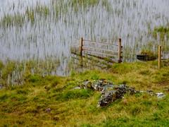 Fuaran na Fenne, Sept 2017 (3) (Janpram) Tags: fuarannafenne scotland walkinglandscape scottishcountryside scottishlandscape landscape countryside trees rain