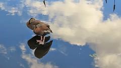 Anglų lietuvių žodynas. Žodis fowl reiškia 1. n naminis paukštis; naminiai paukščiai;2. v medžioti paukščius; fowling- piece n medžioklinis šautuvas lietuviškai.