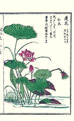 Sacred lotus (Japanese Flower and Bird Art) Tags: flower sacred lotus nelumbo nucifera nelumbonaceae kiyoshi takizawa nihonga woodblock picture book japan japanese art readercollection