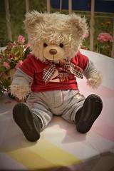 _DSC0677 (willdrewitsh) Tags: william drewitsh stuffed toy teddy bear plush plushie nounours doudou peluche jouet oliver