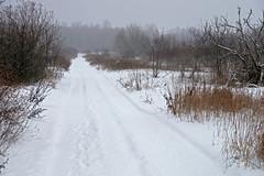 Lumine tee (Jaan Keinaste) Tags: pentax k3 pentaxk3 eesti estonia loodus nature lumi snow udu fog talv winter