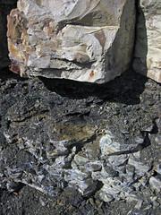 Maury Shale (Lower Mississippian; Burkesville West Rt. 90 roadcut, Kentucky, USA) 18 (James St. John) Tags: phosphatic nodule nodules phosphate phosphorite maury shale mississippian cumberland county kentucky condensed interval burkesville