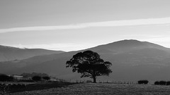 Lone Tree (Coxar) Tags: blackandwhite northwales wales landscape