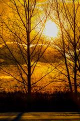 Coucher de Soleil - Sunset (MichelGuérin) Tags: 2019 canada coucherdesoleil exterior extérieur golfdoval hiver janvier lightroomcc michelguérin nature nikon nikonafsnikkor200500mmf56eedvr nikond500 qc québec sunset technoparcmontréal arbres dorval ca