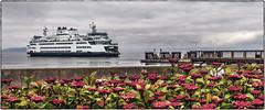M/V Suquamish (NoJuan) Tags: ferry ferryboat mukilteo pugetsound washingtonstate pacificnorthwest microfourthirds micro43 mirrorless olympuspenf 918mm olympus918mm