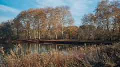 Alley (explored 2019/1/28) (Tom Levold (www.levold.de/photosphere)) Tags: autumn bäume fuji herbst landscape landschaft natur nature pond teich trees x100f herten schlosspark