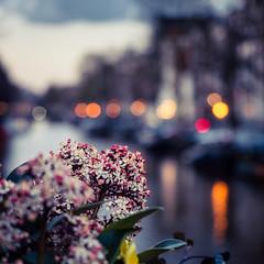 A0153116 (rpajrpaj) Tags: amsterdam city netherlands nederland nederlandvandaag bluehour thebluehour cityscape citylights