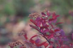 Autumn days (AllaTabashnikova) Tags: flora garden wildflower nature autumn colorful bright