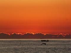 Primer amanecer 2019 (5) (calafellvalo) Tags: amaneceralbasolcalafellseaalbadasunrise amanecer sunrise amanecerdelaño2019 alba albada sea mar calafellvalo contraluz calafell aves gaviotas