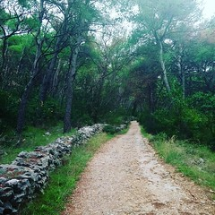 Marjan hill (TGM for Split Dalmatia Croatia) Tags: split croatia marjan hill green nature autumn fall android app googlemaps google maps walking travel travelguide guide tourist
