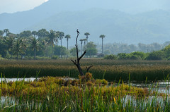 Sam Roi Yot (sillie_R) Tags: nationalpark samroiyot swamp thailand prachuapkhirikhan th