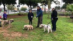 IMG_8476 (Doggy Puppins) Tags: educación canina adiestramiento canino perro dog