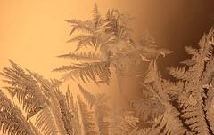 "Happy to see January go ""AWAY"" (iofdi) Tags: away atsh frost 17f macro ice winter"