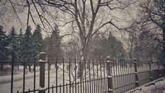 IMG_20190104_135619_CF-01 (taishiro1) Tags: зима снег мороз мобилография мобильноефото холод парк деревья mobilography winter snow cold huawei p20pro