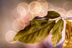 Trioplan still life (bresciano.carla) Tags: trioplan28100mm sonyα6300 bokeh bubbles colors leaf light vintagelens manuallens m42