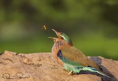 IMG-20171229-WA0020 (TARIQ HAMEED SULEMANI) Tags: sulemani tariq tourism trekking tariqhameedsulemani winter wildlife wild birds nature nikon