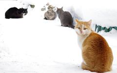 IMGP6508 (PahaKoz) Tags: зима природа сад снег winter nature garden snow котейка котэ кот кошки кошка питомец рыжий животное animal red pet cat tomcat cats