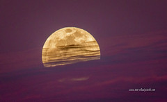 Full Moon and Clouds (tclaud2002) Tags: moon full fullmoon fullbloodmoon fullwolfmoon fullbloodwolfmoon january 2019 12019 nature mothernature moonrise outdoors trees sky clouds cloudy pineglades naturalarea pinegladesnaturalarea jupiter florida usa