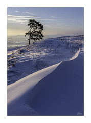 Drifts (JRTurnerPhotography) Tags: sony sonyalpha sonya7riii a7r3 a7riii sonymirrorless jaketurner jrturnerphotography picture print image photo photography photograph photographer mirrorless mirrorlesscamera february winter martinsellhill valeofpewsey pewseyvale wiltshire england europe uk unitedkingdom gb britain greatbritain landscape landscapephotography nature naturallandscape outdoor outdoorphotography sunrise dawn clouds goldenlight sunlight countryside farmland rollinghills wiltshirecountryside snow snowfall lonetree scotspine