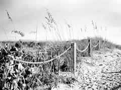 Warmth (Demmer S) Tags: beach path summertime sand summer warm nature fence rope posts footprints grass outdoors seasonal seasons grasses warmth outside footsteps tracks footprint walking shoreline sunshine shore sunny seashore beachphotography plants fenced fencedfriday fencefriday fencelike fences fencing hff happyfencefriday plant bw monochrome blackwhite blackandwhite blackwhitephotos blackwhitephoto