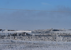 Frozen in time (darletts56) Tags: sky blue grey cloud clouds frost frosty frozen white thick grass fence fences pole poles post posts wire line power lines wires tree trees road hill prairie field fields saskatchewan canada country landscape ground bush bushes brush