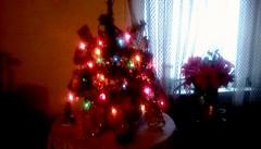 Tabletop Christmas tree! (Maenette1) Tags: chrstmas tree tabe window home menominee uppermichigan flicker365 allthingsmichigan absolutemichigan projectmichigan michiganchristmas
