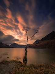 Buttermere Lone Tree (Richard Walker Photography) Tags: lonetree cumbria lakedistrict buttermere