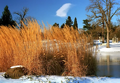 "Cincinnati - Spring Grove Cemetery & Arboretum ""Tall Grass At Willow Lake"" (David Paul Ohmer) Tags: cincinnati ohio spring grove cemetery arboretum willow lake tall grass winter"