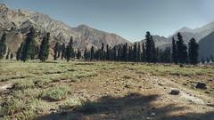 Forest (Awais Nawaz Painter) Tags: bestshot madaklasht awais nawaz art painter landscape portrait trend morning forest pakistan chitral travel photographs hd original image nature national