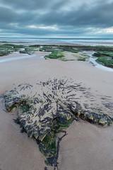 Seaweed and sky (digiphill) Tags: 2019 coast coastal cresswell cresswellbeach february northeast northeastcoast northumberland northumberlandcoastaonb sunrise winter