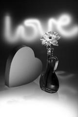 still-life 16-11-2018 004 (swissnature3) Tags: stilllife flowers light macro love