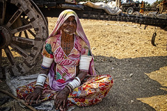 GUJARAT : LES GENS DU VOYAGE (pierre.arnoldi) Tags: khambha gujarat inde in pierrearnoldi photographequébécois photographesurinstagram photographsurflickr on1photoraw2019 canon6dmarkii