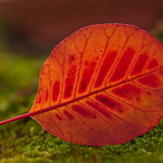 Glowing Red thumbnail