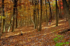 North Fork Mountain: Swishing through the leaves (Shahid Durrani) Tags: north fork mountain autumn fall foliage leaves hiker selfie monongahela national forest west virginia
