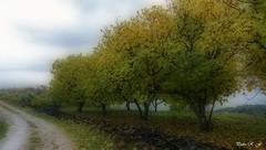 Paseo otoñal (pedroramfra91) Tags: naturaleza nature otoño autumn exteriores outdoors arboles trees camino road colores colors
