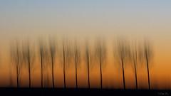 Where is end of the road? #2 (mirosławkról) Tags: nikonnaturephotography night poland podlasie tree trees sky orange orangeandblue sunset blurred lines intentionalcameramovement